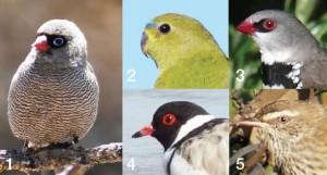 Endangered Birds of the Fleurieu